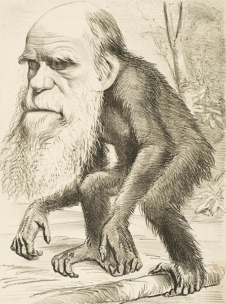 446px-Darwin_ape